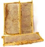 Honeycombs isolated on white Stock Image