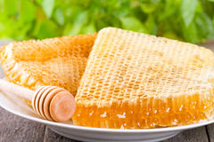 Honeycombs Royalty Free Stock Image