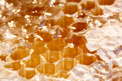 Honeycombs Zdjęcia Royalty Free