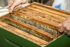 honeycombs Obrazy Stock