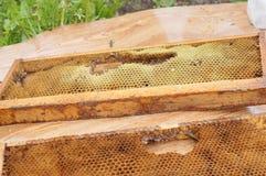 honeycombs Obraz Stock