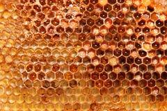honeycombs Zdjęcia Royalty Free