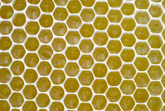 Honeycombs background Royalty Free Stock Photography