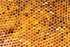 Honeycombs Stock Image