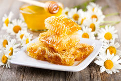 Honeycombs with daisy flowers Stock Image