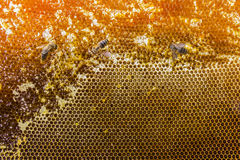 Honeycombs filled with honey and bees closeup. Honeycombs filled with honey and three bees closeup Stock Photo