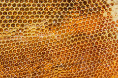 Honeycombs filled with honey closeup Royalty Free Stock Image
