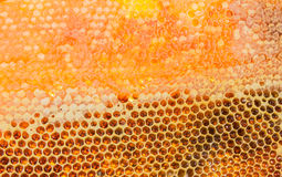 Honeycombs filled with honey closeup. In each cell of honeycomb the reflection of light in the form of an asterisk. Texture Stock Photography