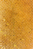 Honeycombs filled with honey closeup. In each cell of honeycomb the reflection of light in the form of an asterisk. Texture Stock Photos