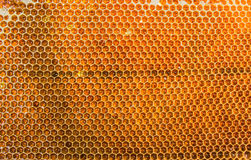 Honeycombs filled with honey closeup. In each cell of honeycomb the reflection of light in the form of an asterisk. Texture Royalty Free Stock Photo