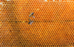 Honeycombs filled with honey closeup. In each cell of honeycomb the reflection of light in the form of an asterisk. Texture Royalty Free Stock Image