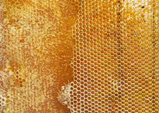 Honeycombs Royalty Free Stock Photography