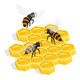 Honeycombs Flat 3d vector isometric illustration. Honey natural healthy food production. Royalty Free Stock Photo