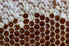 Honeycombs in hive Stock Photos
