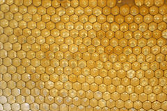 Honeycombs in hive Stock Images