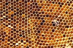 Honeycombs Stock Image