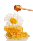 Honeycombs and honey flowing down from ladle, camomile isolated. Stock Photos