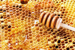 Honeycombs Stock Images