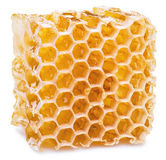 Honeycombs. Stock Image