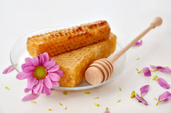 Honeycombs. On the plate with a flower Stock Image