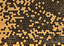 Honeycombs with sealed cells. And honey royalty free stock photography