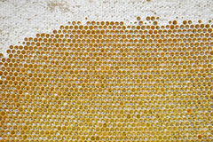 Honeycombs with sealed cells. And honey stock photo