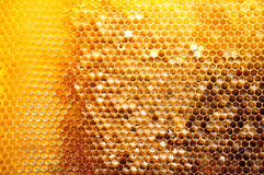 Honeycombs with sealed cells Stock Photography