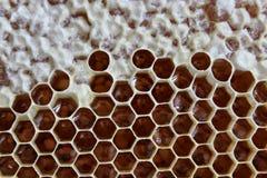 Honeycombs w roju Zdjęcia Stock