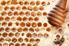 Honeycombs and wooden stick. Royalty Free Stock Images