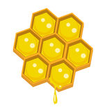 Honeycomp Royaltyfri Bild
