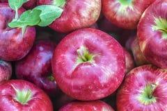 Honeycrisp Äpfel Lizenzfreie Stockfotografie