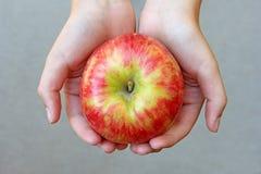 Honeycrisp Apple που κρατιέται στους φοίνικες ενός παιδιού Στοκ φωτογραφίες με δικαίωμα ελεύθερης χρήσης
