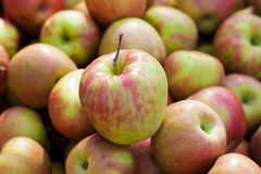 Honeycrisp Apples Royalty Free Stock Images