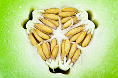 Honeydew Melon Closeup Stock Photography