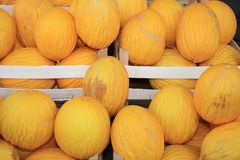 Honeydew Melon on Farmers Market in Catania stock photos