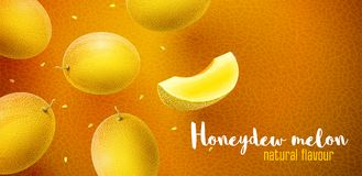 Honeydew melon sweet fruits flavour banner design. Honeydew melon flavour poster banner design with pattern and copyspace. Whole fresh ripe sweet fruit with stock illustration