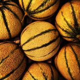 Honeydew melons Royalty Free Stock Photography