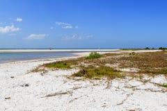 Honeymoon Island. The beach at Honeymoon Island neat Tampa in Florida royalty free stock photos