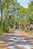 Honeymoon Island Nature Hiking, Walking Trail. A nature trail at Honeymoon Island in Dunedin, Florida, surrounded by tall pine trees and fan palm trees, and royalty free stock photos