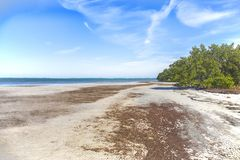 Honeymoon Island Secluded Beach. Near the nature trails in Dunedin, Florida royalty free stock images