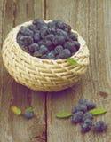 Honeysuckle Berries Stockfotos