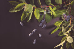 Honeysuckle Berries Fotografia Stock