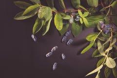 Honeysuckle Berries Fotografie Stock Libere da Diritti