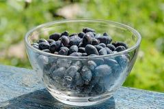 Honeysuckle berries in bowl Stock Image