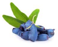 Free Honeysuckle Berries Isolated On White Background Stock Photos - 72835123