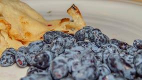 Honeysuckle berries Stock Image