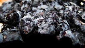 Honeysuckle berries Stock Photo