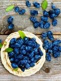 Honeysuckle Berries Stock Photography