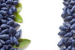 Honeysuckle blue berry fruits on white background Stock Photos