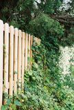 Honeysuckle Fence. Board fence with wild honeysuckle and foliage growth royalty free stock image